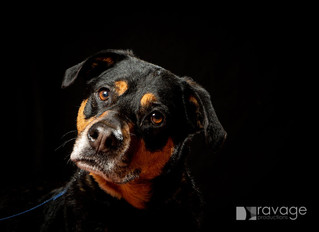Animal magic - portraits with a difference