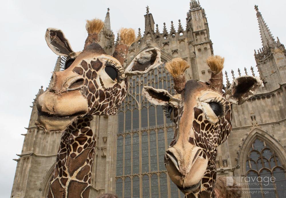 Giraffes outside the Minster