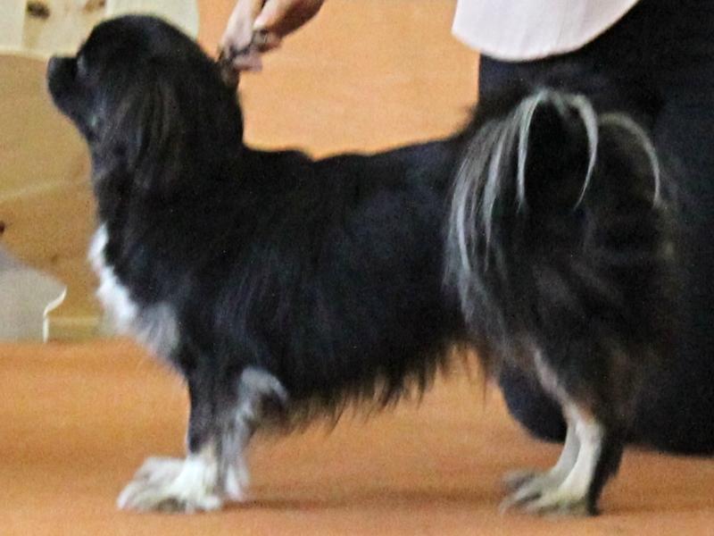 Della Ylistarossa