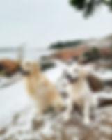 Vuorenriteen Kevin & Vuorenrinteen Uniikki
