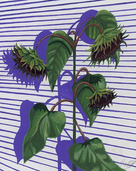 Wilted Sunflower.jpg