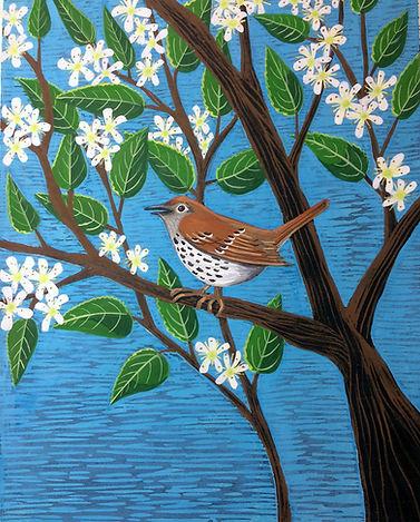 Spring Serviceberry.JPG