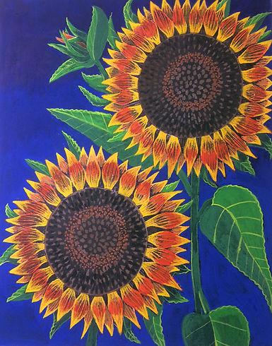 Tricolor Sunflower.JPG