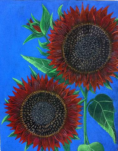 Chianti Sunflowers.JPG