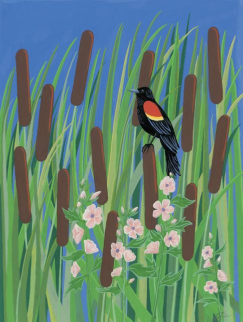 RedwingBlackbird.JPG