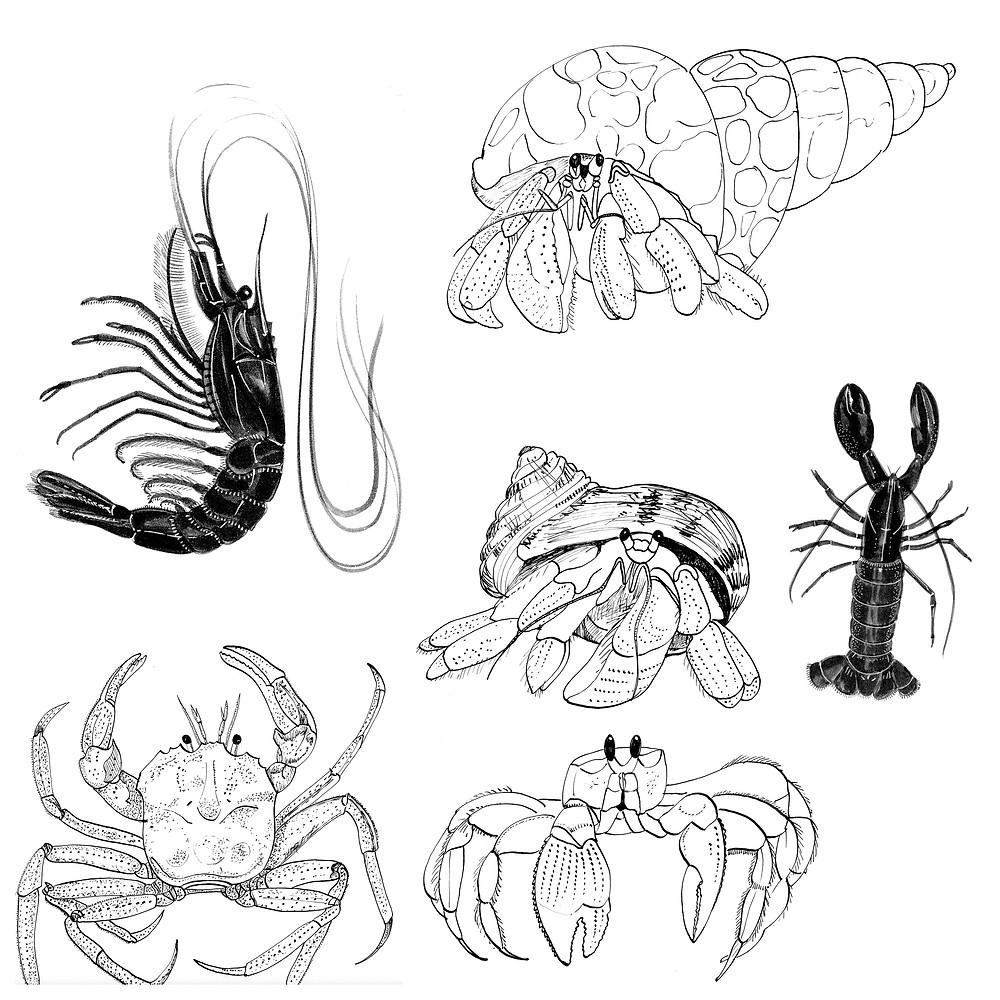 crustacean_sketches.jpg