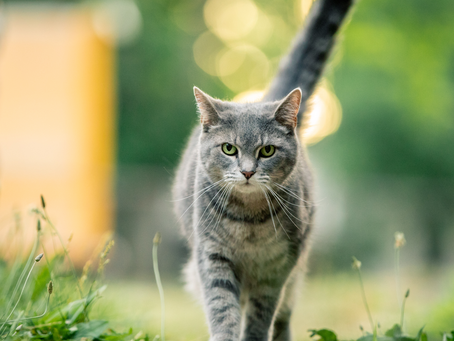 July is National Pet Loss Prevention