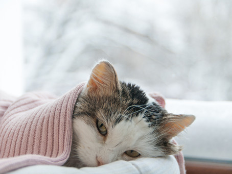 How to Tell When Your Cat Is Not Feeling Well.
