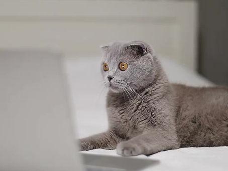Why Do Cat's Respond To Cat Nip?