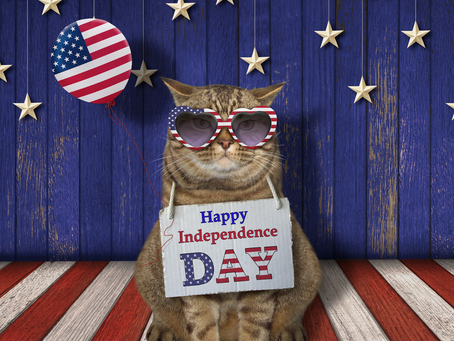 Keeping your cat safe on July 4th