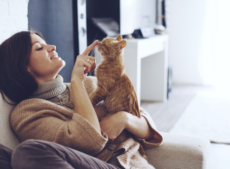 Why Is It That Cat's Purr?