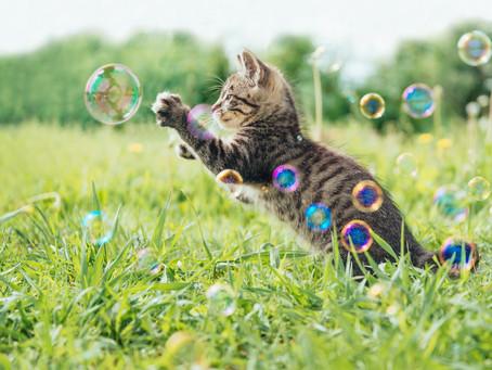 Why Do Cats Respond To Catnip?