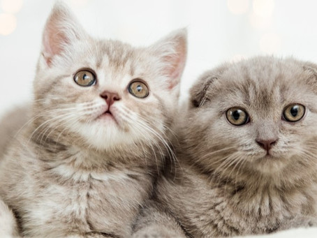 What To Expect When You are Expecting a New Kitten