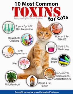 February is Pet Poison Prevention Month