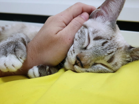 February is National Cat Health Month