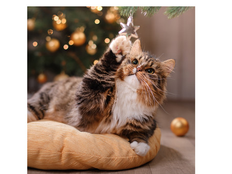 Keeping Your Kitty Safe At Christmas!