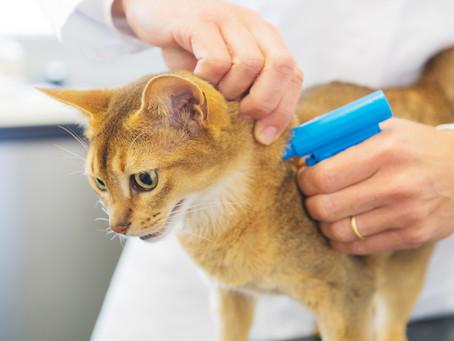 Understand Pet Microchipping