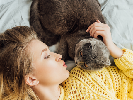 10 Signs That Your Cat Loves You!