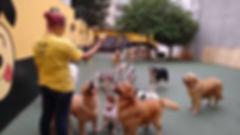 Creche para cães em São Bernardo do Campo