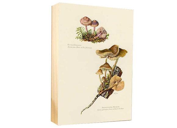 Botánica 6