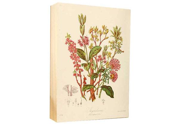 Botánica 4