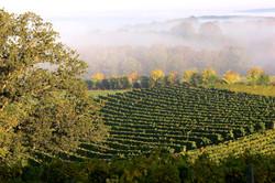 Ses domaines viticoles
