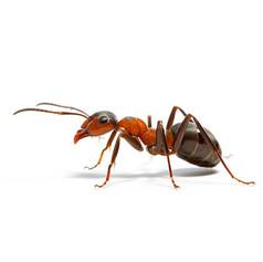 General Exterior Pest Control