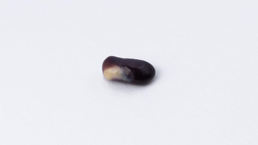 Wild Quahog Pearl - 84470