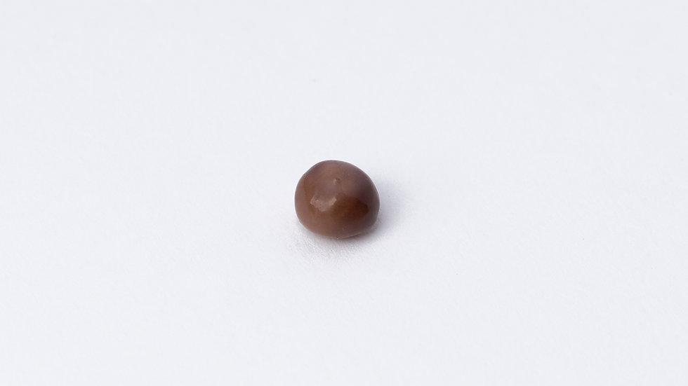 Wild Quahog Pearl - 76885