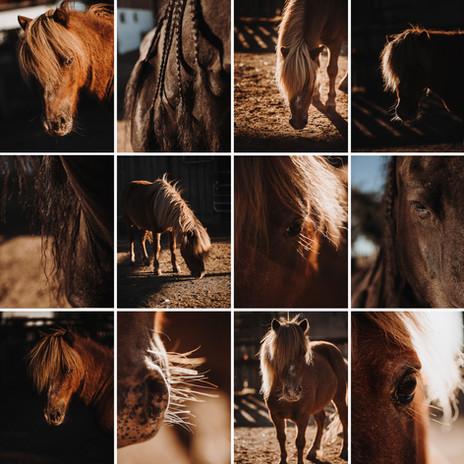 Pferde_2.jpg