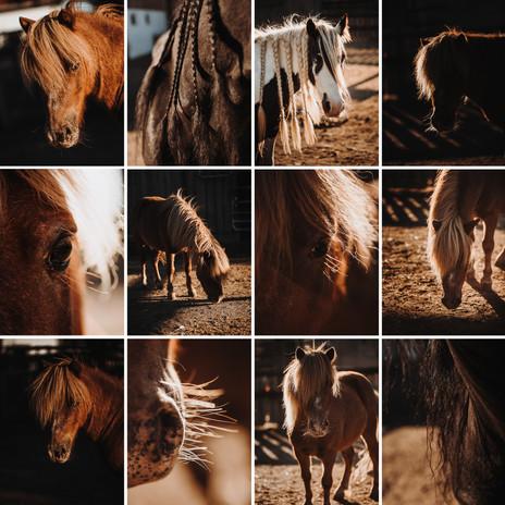 Pferde_1.jpg