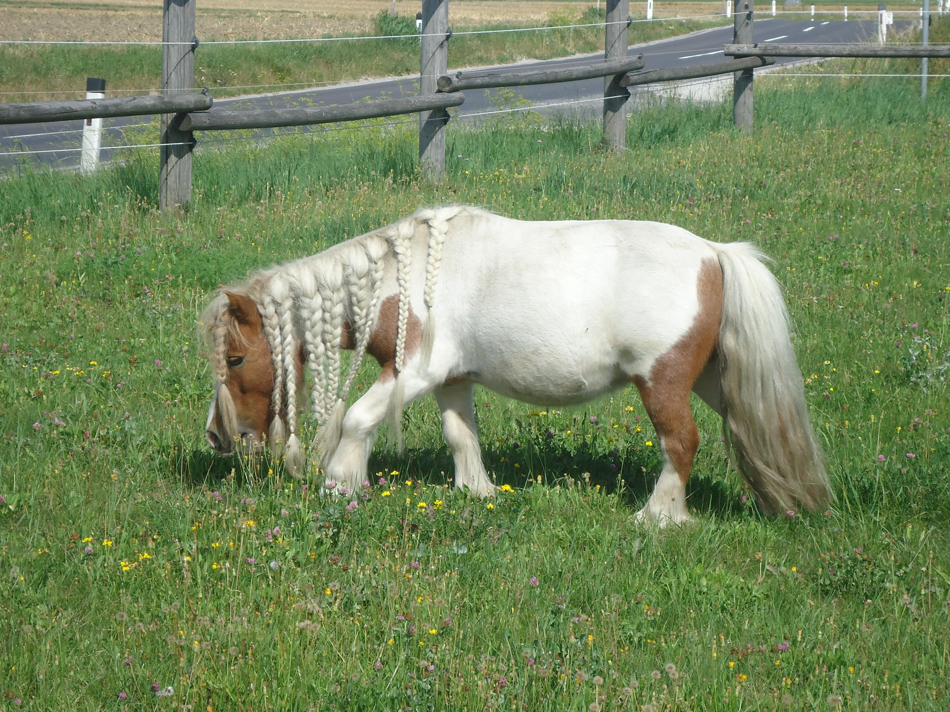 Pferde-Natur-Wanderung mit Reiten