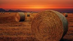 netwrap, net wrap, silage, farming