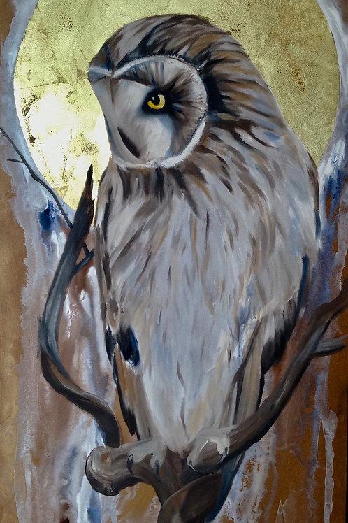 Winter Sun Owl on a Branch 12x24