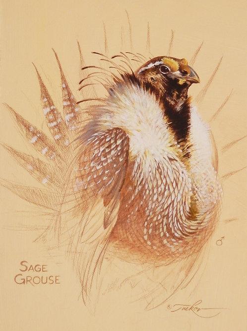 Sage Grouse 8x10