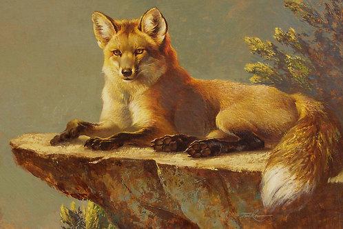 Fox on a Rock 12x16