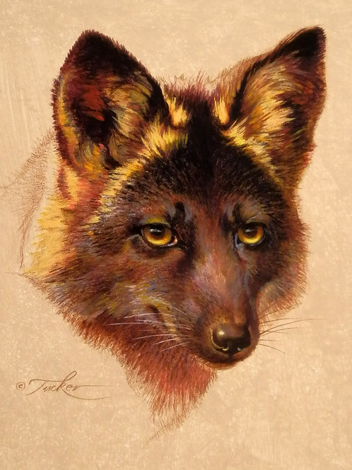 Black Fox Portrait 11x14