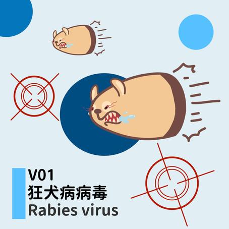 微微生物:V01狂犬病毒