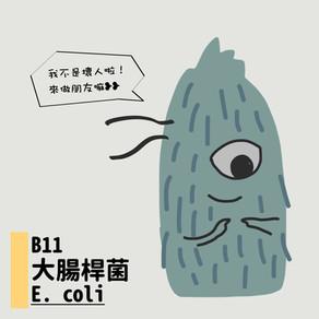 微微生物BACTERIA 11:大腸桿菌