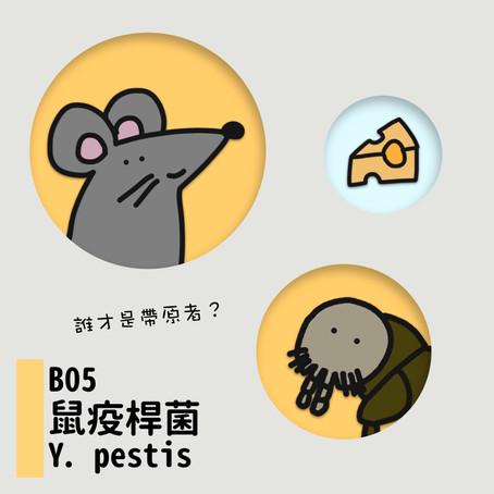 微微生物BACTERIA 05:賽車手·鼠疫桿菌