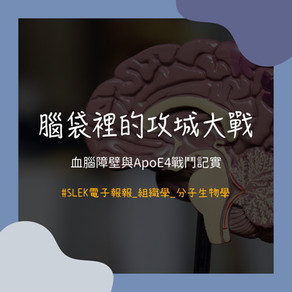 腦袋裡的攻城大戰——血腦障壁與ApoE4戰鬥記實