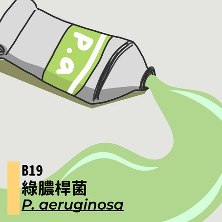 微微生物BACTERIA XIX:綠膿桿菌