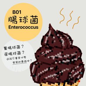 微微生物BACTERIA 01:大法師.腸球菌