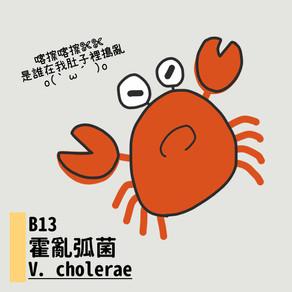 微微生物BACTERIA 13:霍亂弧菌