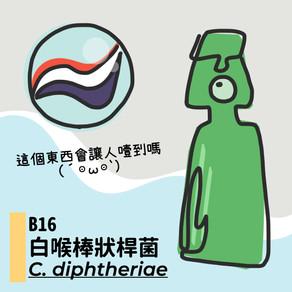 微微生物BACTERIA 16:白喉棒狀桿菌