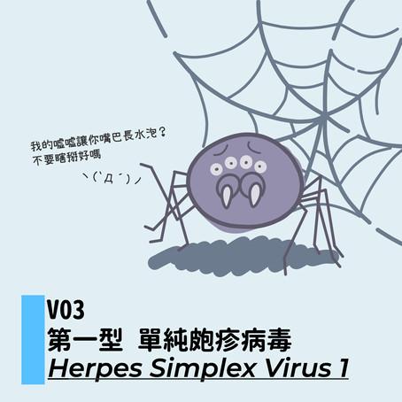 微微生物:V03 單純皰疹病毒