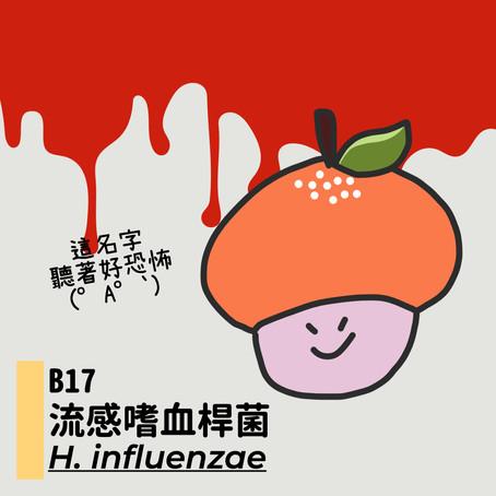 微微生物BACTERIA 17:流感嗜血桿菌