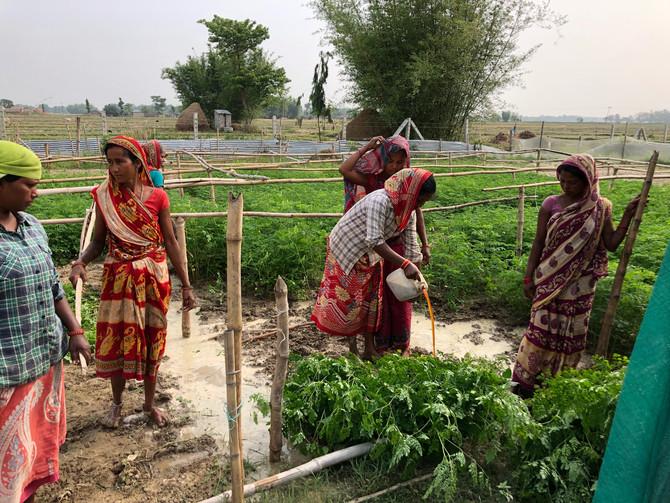 Moringa-produktion skal forbedre levevilkårene for nepalesiske bønder