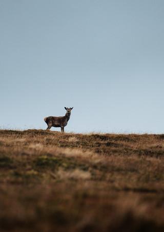 Deer-Buck-Hills.jpg