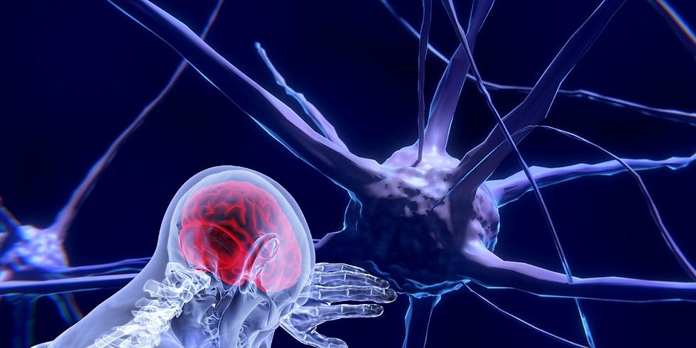 Leveraging Neuroscience for Agility